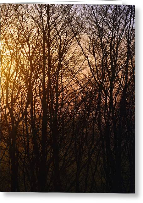 Winter Sunset - Vertical A Greeting Card by Richard Andrews
