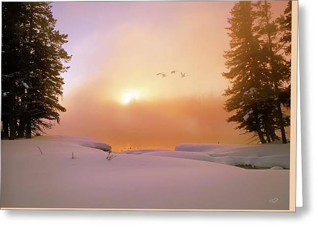Greeting Card featuring the photograph Winter Swans by Leland D Howard