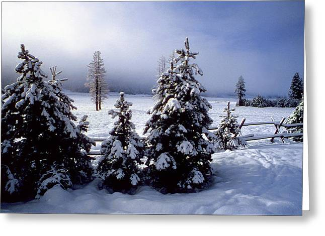 Winter Takes All Greeting Card