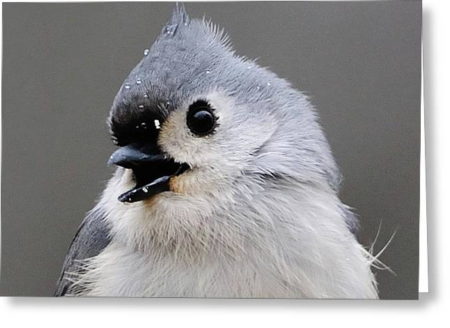 Winter Titmouse Greeting Card