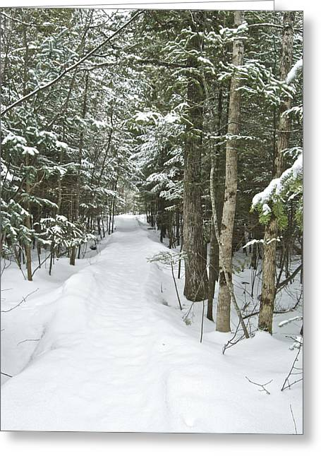 Winter Trail 2200 Greeting Card by Michael Peychich