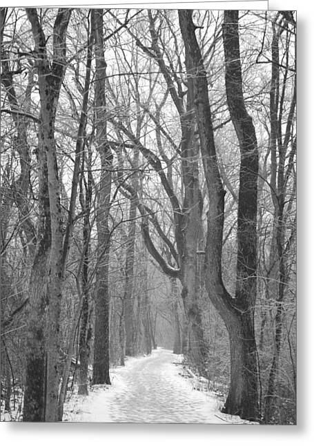 Winter Trail Greeting Card by Peter  McIntosh