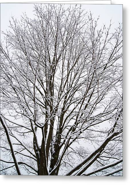 Winter Tree    Poster Greeting Card