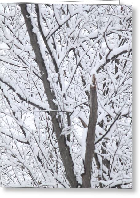 Winter Tree Greeting Card by B and C Art Shop