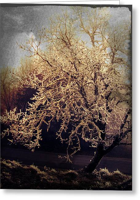 Winter Tree Dark Greeting Card