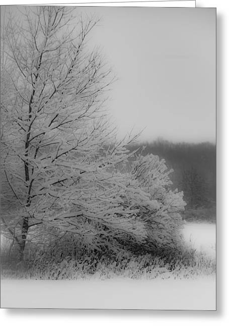 Winter Tree Greeting Card