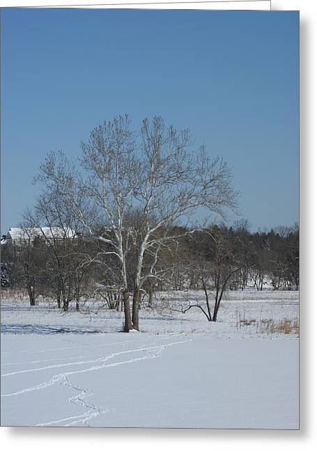 Greeting Card featuring the photograph Winter Tree by Heidi Poulin