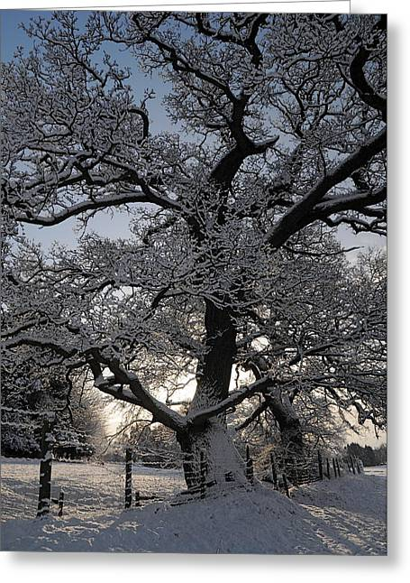 Winter Tree In North Wales Greeting Card