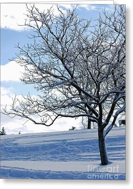 Greeting Card featuring the photograph Winter Tree by Lila Fisher-Wenzel
