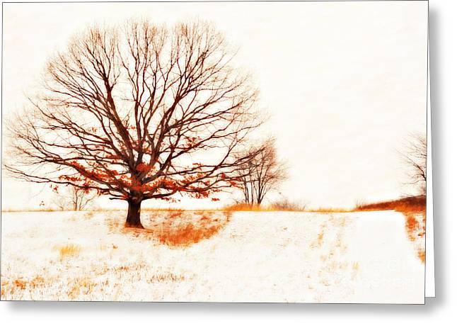 Winter Tree Greeting Card by Randy Steele