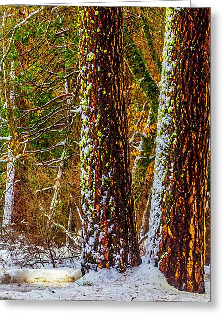Winter Trees 2 Greeting Card by Garry Gay