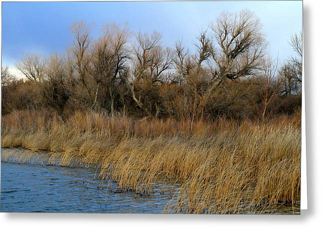 Winter Trees Along The Snake Greeting Card