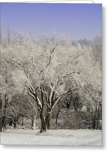 Greeting Card featuring the photograph Winter Trees by Diane Merkle