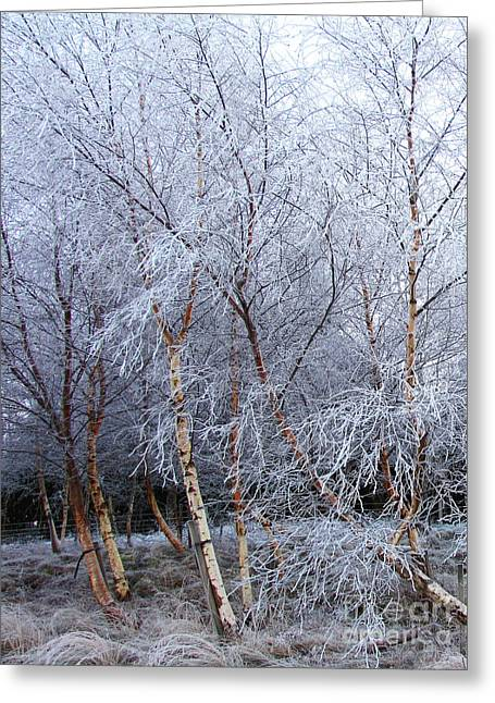 Greeting Card featuring the photograph Winter Trees by Jacqi Elmslie