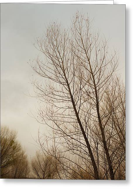 Winter Trees Greeting Card by Joseph Smith