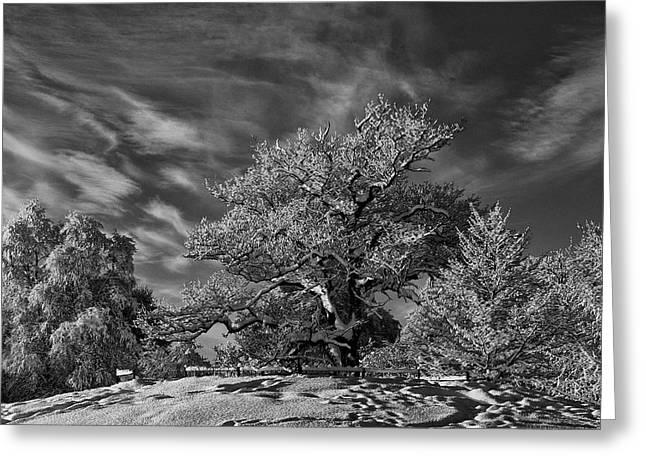 Winter Trees Greeting Card by Mark Denham
