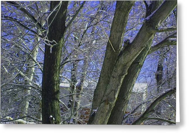 Winter Trees Greeting Card by Misty VanPool