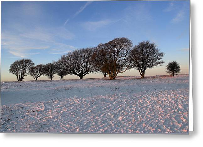 Winter Trees On The Ring Greeting Card