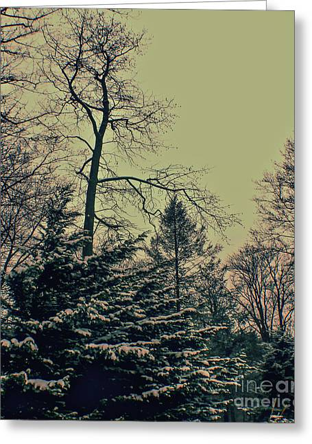 Winter Trees Greeting Card by Sandy Moulder