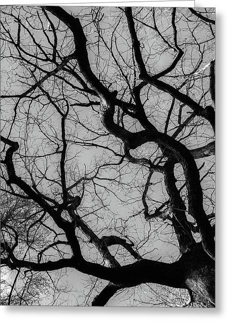 Winter Veins Greeting Card