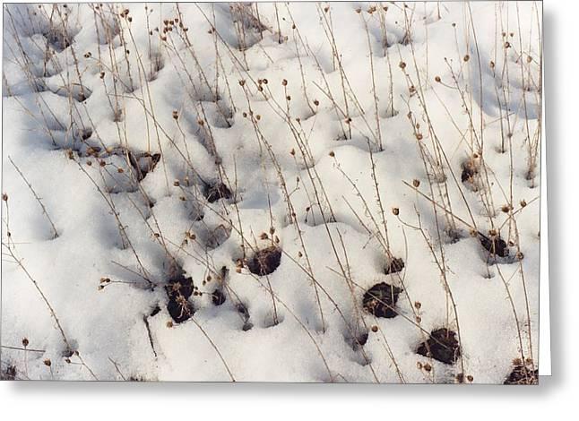 Mud Season Greeting Cards - Winter Weeds Greeting Card by Harry  Kellow