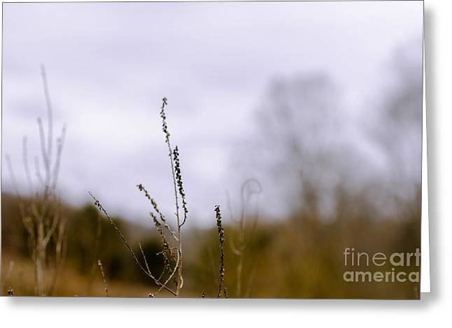 Winter Weeds Greeting Card by Victoria Lawrence