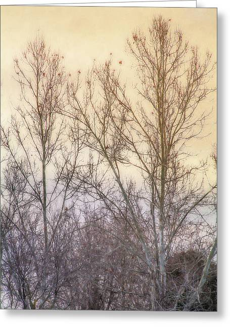 Winter Whisper In The Trees Greeting Card by Terry Davis