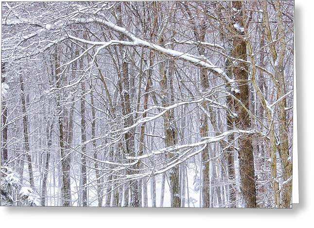 Winter White Greeting Card