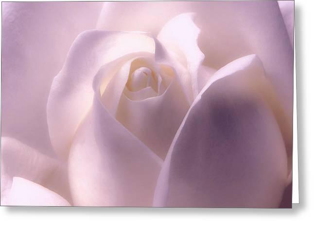 Winter White Rose 2 Greeting Card