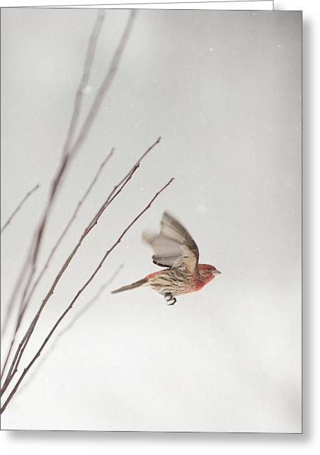 Winter Wind Surfing 1 Greeting Card