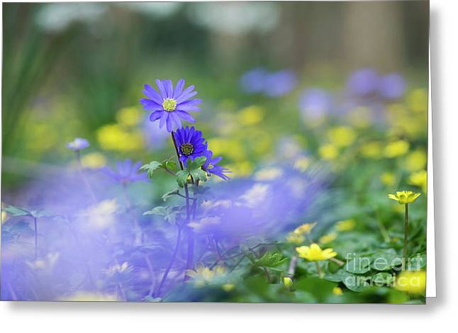 Winter Windflower Greeting Card by Tim Gainey