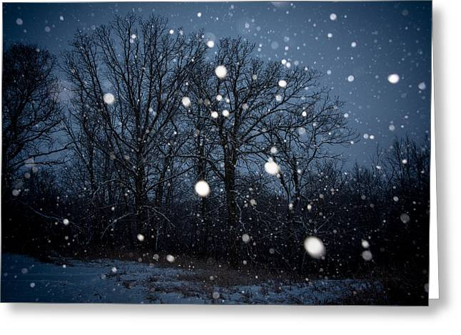 Winter Wonder Greeting Card by Annette Berglund