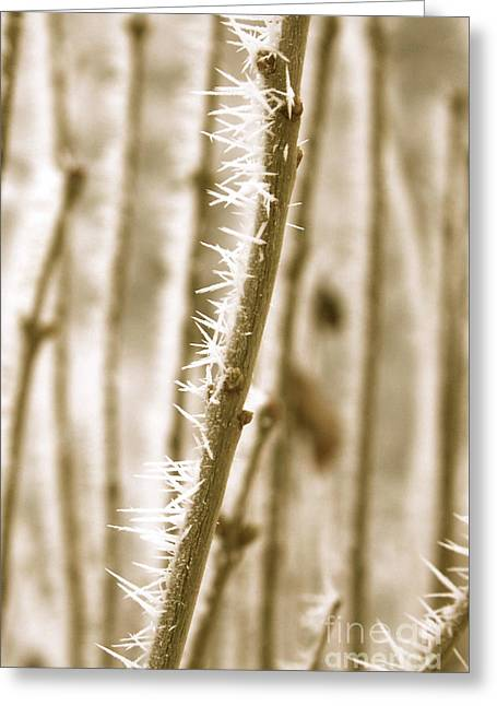 Winter Wonder Hoarfrost Greeting Card