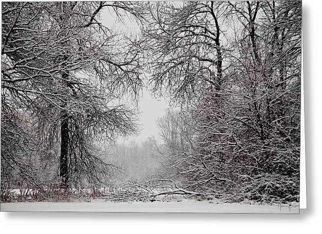 Winter Wonderland II Greeting Card