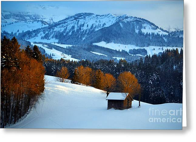 Winter Wonderland In Switzerland - Sunset Light In The Trees Greeting Card