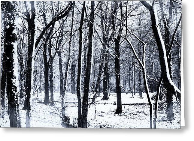 Winter Woodland Greeting Card by Martin Newman