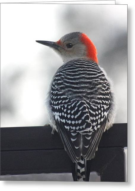 Greeting Card featuring the photograph Winter Woodpecker by Diane Merkle