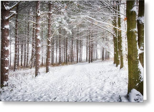 Winter Woods And Path -  Retzer Nature Center  Greeting Card by Jennifer Rondinelli Reilly - Fine Art Photography
