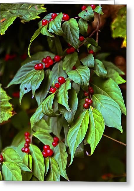 Winterberry Greeting Card by Michael Putnam