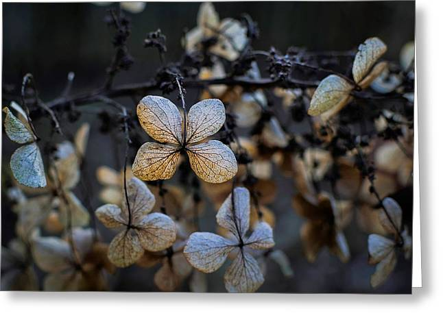 Winterized Hydrangea Greeting Card
