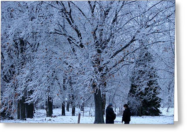 Winters Beauty Greeting Card by Dave Clark