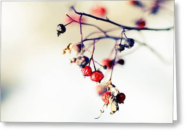 Winter's Berries Greeting Card by Todd Klassy