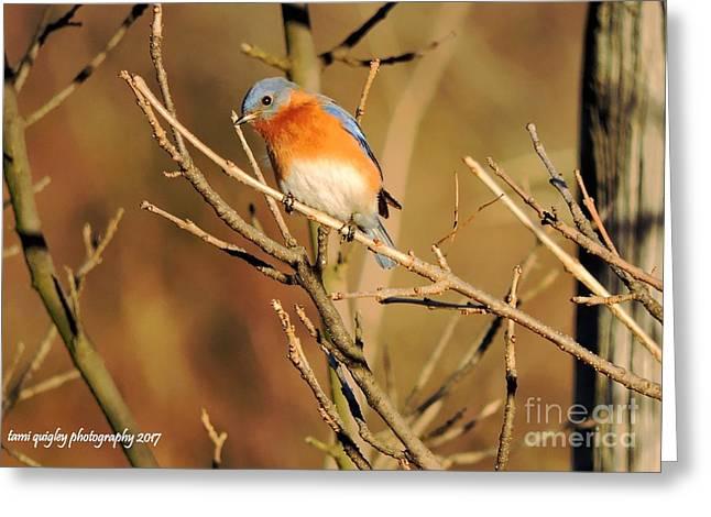 Winter's Bluebird  Greeting Card