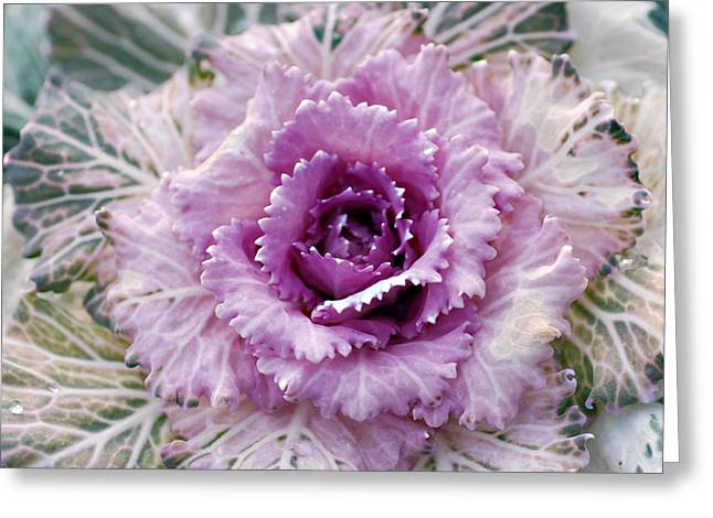 Winters Blush Greeting Card by Don  Wright
