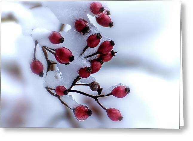 Winter's Color Greeting Card
