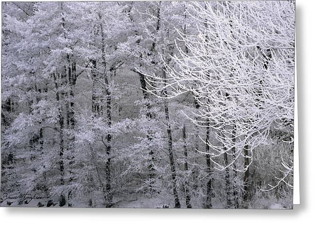 Winter's Down Greeting Card