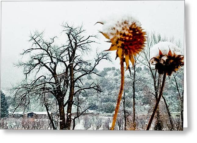 Winters Field Greeting Card
