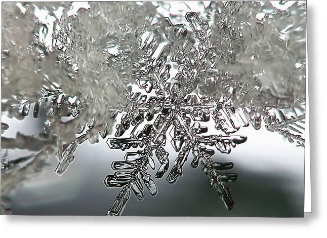 Winter's Glory Greeting Card by Lauren Radke
