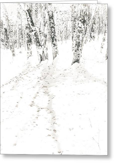 Greeting Card featuring the photograph Winter's Shadows by The Forests Edge Photography - Diane Sandoval