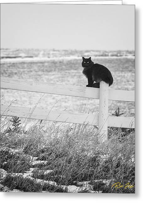Greeting Card featuring the photograph Winter's Stalker by Rikk Flohr